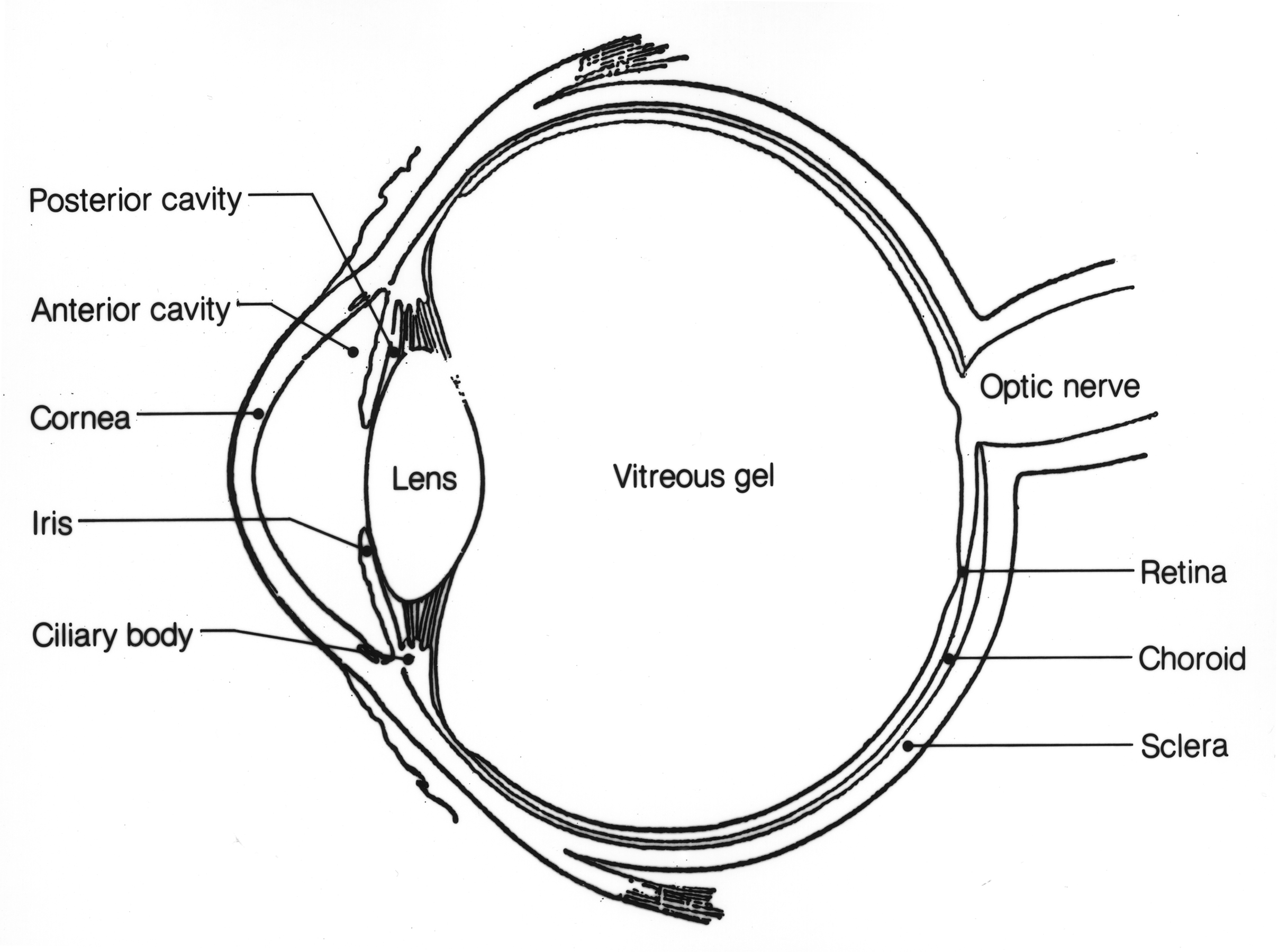 Eye image details nci visuals online view pooptronica Image collections