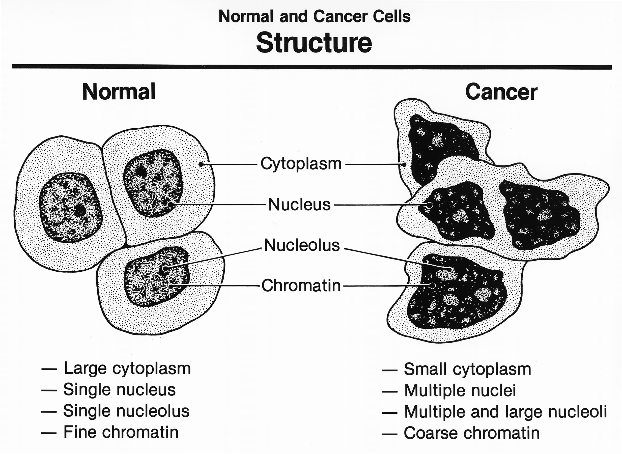 Normal And Cancer Cells Structure Image Details Nci Visuals Online Load Cell Diagram View