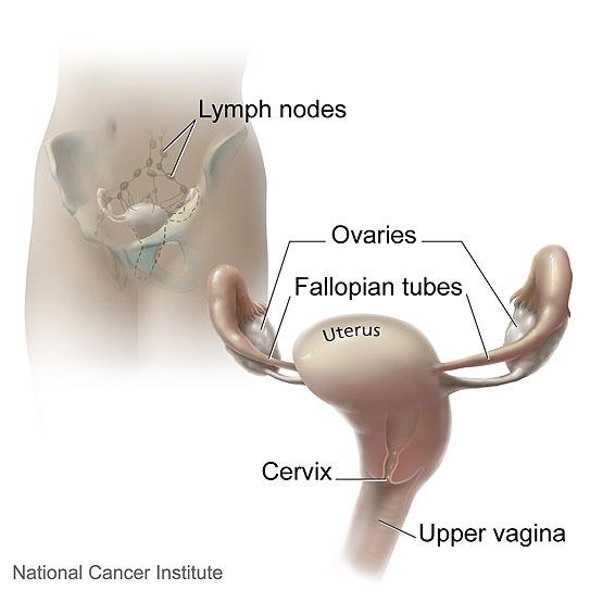 Cervix ccuart Choice Image